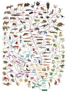 Biodeversity